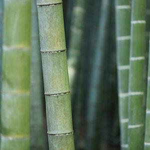 Aceite Esencial de Bambú